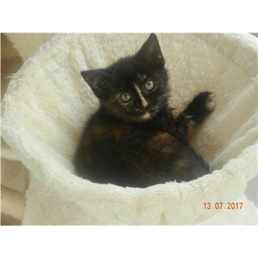 Tortie has found her forever home :)