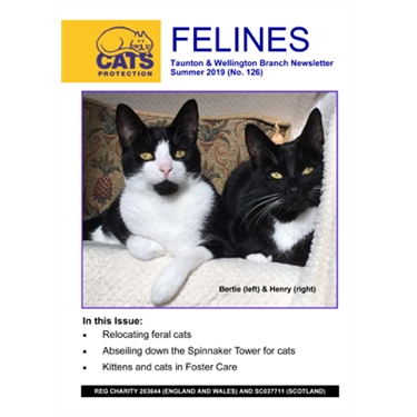 Felines Newsletter Summer 2019