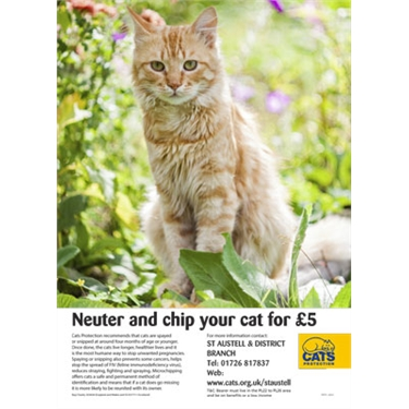 Our neutering campaign just got better