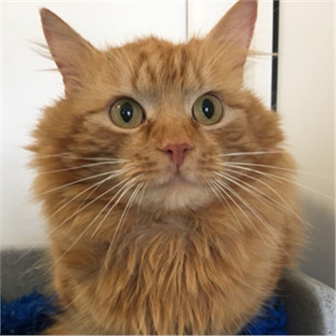 Ginger moggy found on coach is hoping to find his route home