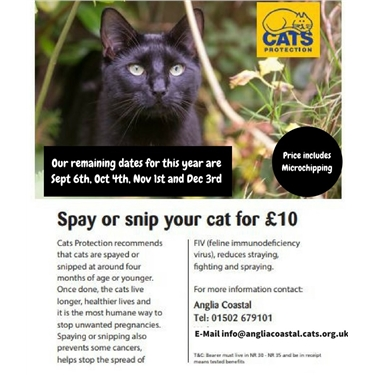 The Importance of Neutering and Microchipping your cat