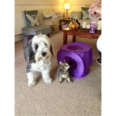 Bertie in his new home