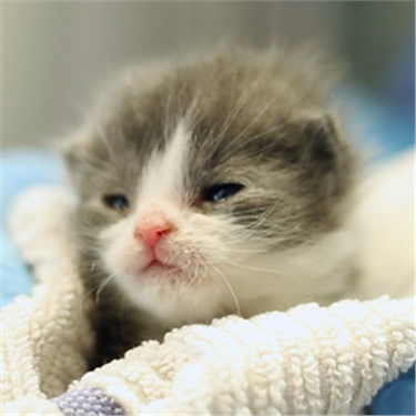 Hand-reared around the clock - the tiny kittens among hundreds being cared for by Cats Protection