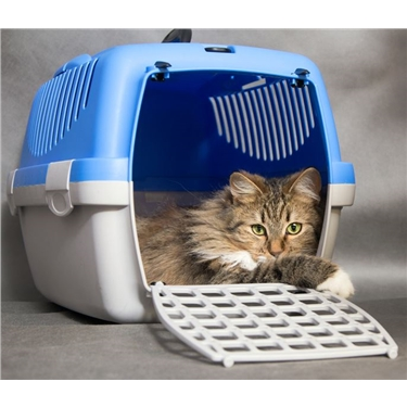 Cat carrier issued solved