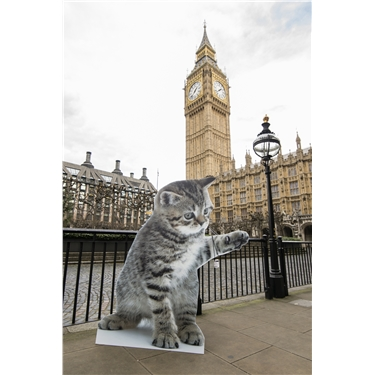 2022 Agenda for Cats