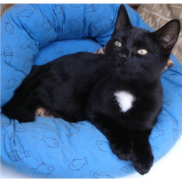 In Support of Black Cats!