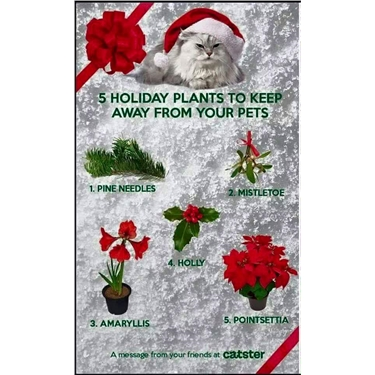 Festive plants potentially fatal to cats