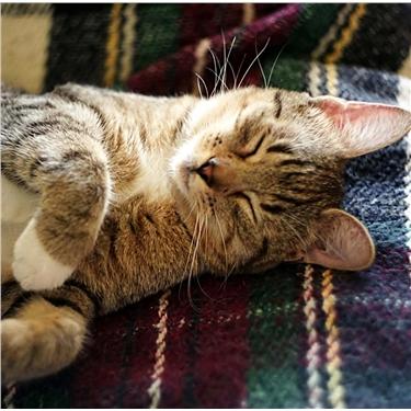 Cat Blankets