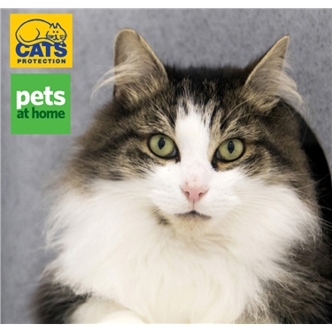 Pets at Home Weekend - Over £95 Raised!!