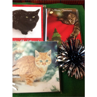 Cats Protection Christmas cards,Calendars etc.,are now on sale at our Truro Shop
