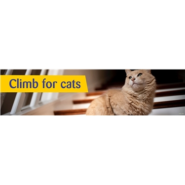 Climb for cats