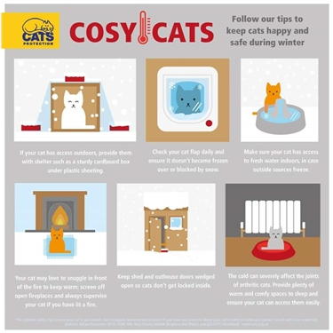 Ways to keep your cat warm and safe