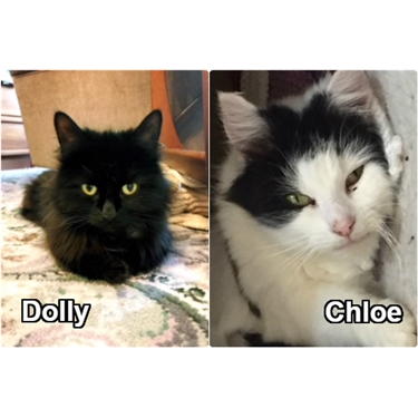 Dolly and Chloe - two of a kind ...