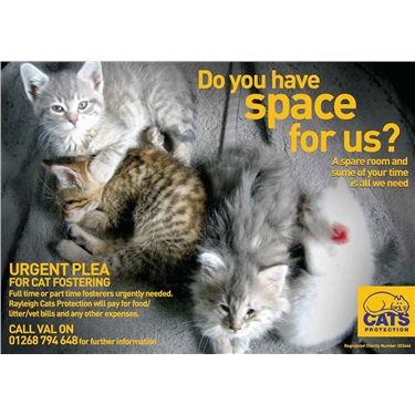 Cat fosterers needed for the summer