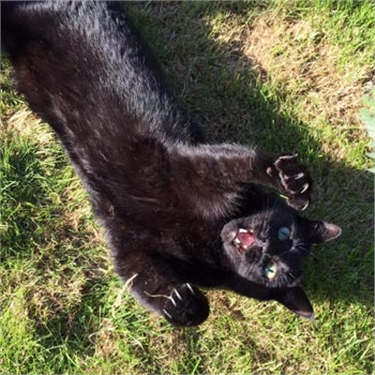 Caspar awarded as the face of Black Cat Day 2016