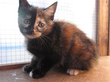 Kitten Food Appeal!!