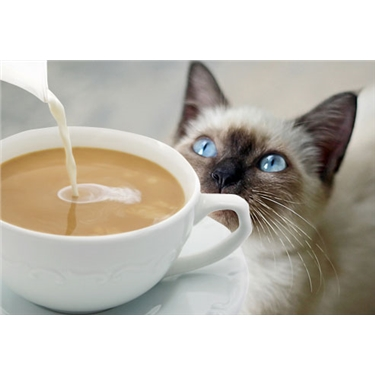 Black Cat Coffee Morning on 27th October 2018