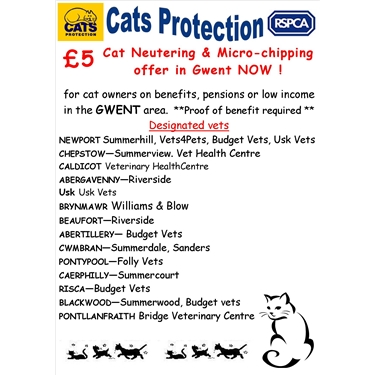 £5 Cat neutering & Microchipping Campaign