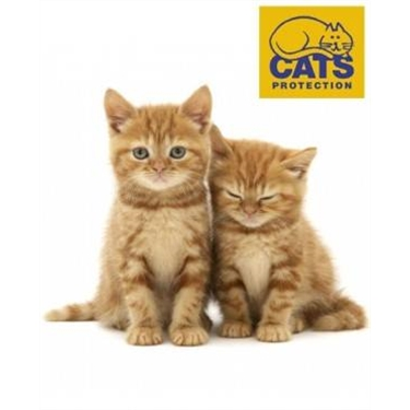 Government changes law to protect kittens