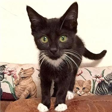 Kittens found dumped in Lowestoft Gardens