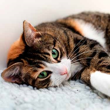 Cat Cam is LIVE!