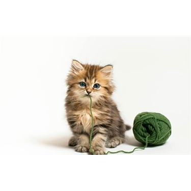 Wool Donation Request