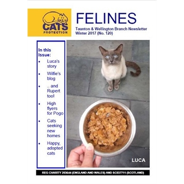 Felines Newsletter Winter 2017