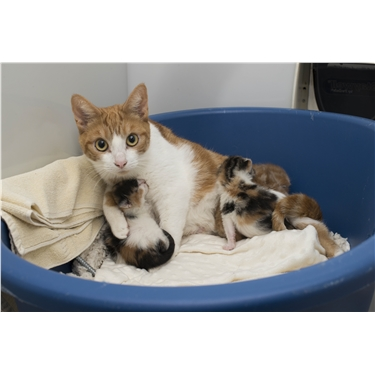 Christmas appeal to help unwanted cats and kittens over the festive season.