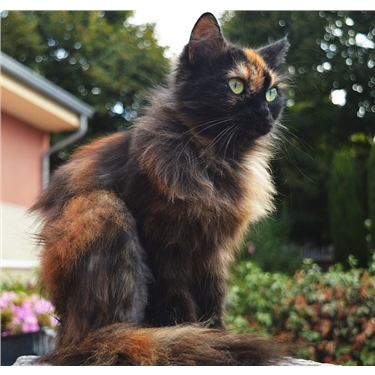 Pancytopenia cat food recalls