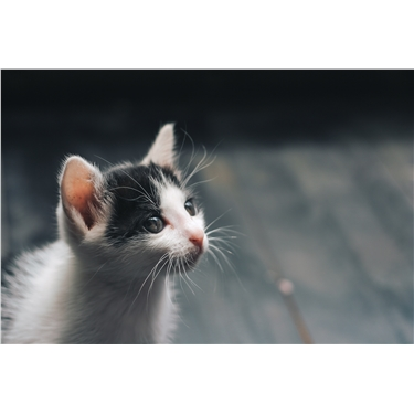 3 Questions to consider before getting a kitten