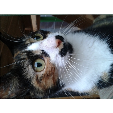 Cat Collar Safety Tips