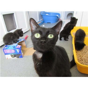 Could you help support Izzy with Cat Pen Sponsorship