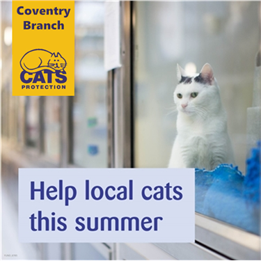 Help Local Cats This Summer