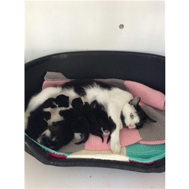 This mum and her kittens are with us now ( kittens only days old )