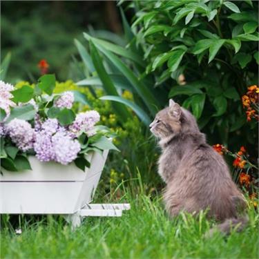 Cat Friendly Garden