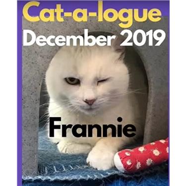 December Cat-a-log