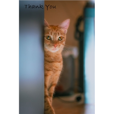 Thank You to Petfayre & customers