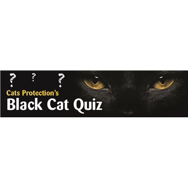 Black cat quiz