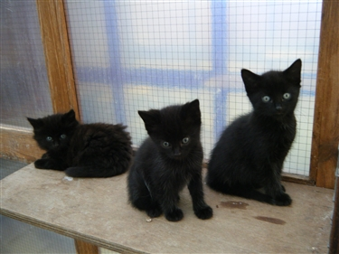 Emergency appeal to deal with surge in unwanted cats and kittens.