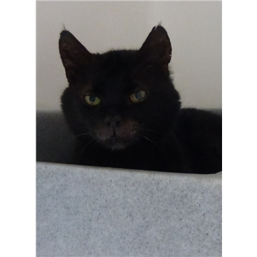 Phillius in our new Cat of the Month