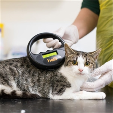 Government call for evidence on compulsory microchipping of cats