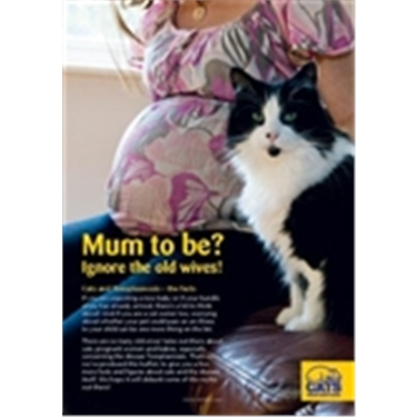 Climate of Confused Cat Advice Concerns Expectant Mums