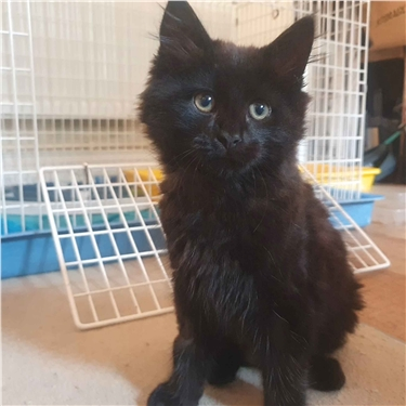 Fourteen-week-old kitten found abandoned in a plastic box needs your help
