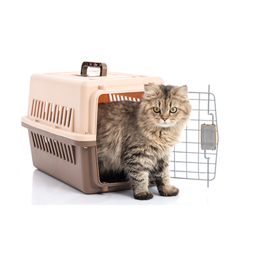 Cat carriers needed
