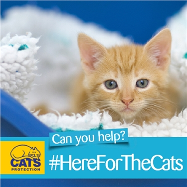 Help us be #HereForTheCats