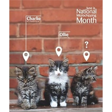June is microchipping month