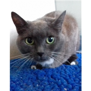 Frankie is a diabetic cat in need of a home