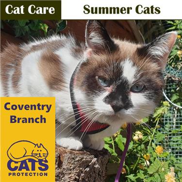 Cat Care: Summer Cats