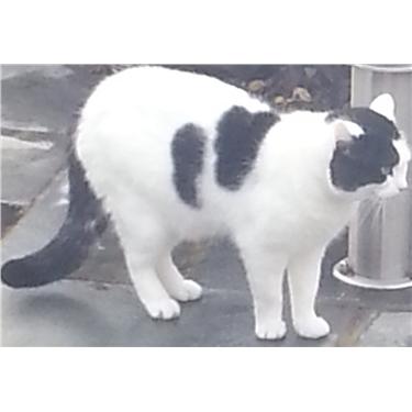 **MISSING CAT**