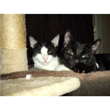 Pippin & Beau